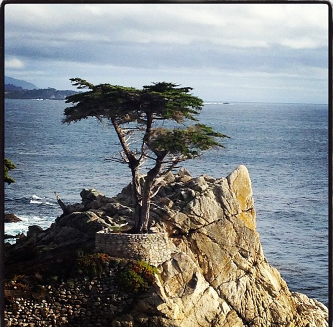 Photo by author. Lone Cypress at Pebble Beach, CA